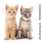 Stock photo gray and red cat isolated on a white background 444683014