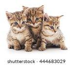 three small kittens isolated on ... | Shutterstock . vector #444683029