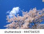 cherry blossoms | Shutterstock . vector #444736525