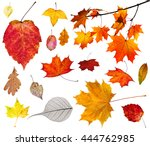 Set Of Various Autumn Leaves...
