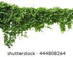 Vine Plants Isolate On White...