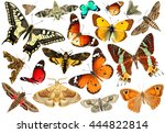 Stock photo colorful butterflies isolated on a white background wildlife insects colors nature 444822814
