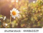 flower with lens flare | Shutterstock . vector #444863329