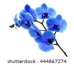 Blue Flower Orchid On White...