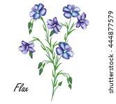 flax  linum usitatissimum ... | Shutterstock .eps vector #444877579