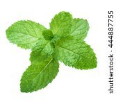 fresh raw mint leaves isolated... | Shutterstock . vector #444887755