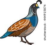 quail | Shutterstock .eps vector #444915874
