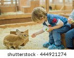 Stock photo boy play with the rabbits in the petting zoo 444921274