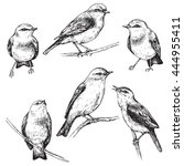 hand drawn set of forest birds... | Shutterstock .eps vector #444955411