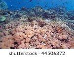heteroxenia fuscescens  gili... | Shutterstock . vector #44506372