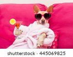 Chihuahua Dog Relaxing At Spa...