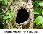 Large Hollow Tree On A...