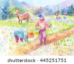 people planting rice in a paddy ... | Shutterstock . vector #445251751