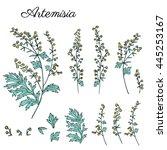 artemisia absinthium  common... | Shutterstock .eps vector #445253167