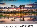sunset on the cornfield nature... | Shutterstock . vector #445363771