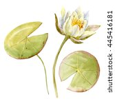 Watercolor Painting White Lotus ...