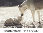 Stock photo dog and cat playing 445479937