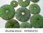 sea urchins | Shutterstock . vector #44560252