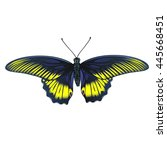 bright butterfly isolated on... | Shutterstock .eps vector #445668451