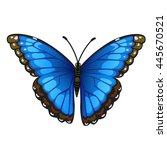 Bright Butterfly Isolated On...
