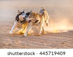 dogs play in sand dust at... | Shutterstock . vector #445719409