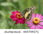 Butterfly On Flower In Tropica...