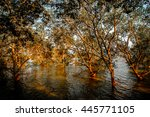 Mangrove Forest In Rayong ...