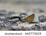 Butterfly From The Taiwan ...