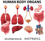 different type of human body... | Shutterstock .eps vector #445796911