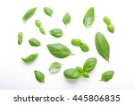 Fresh Basil Leaves On White...