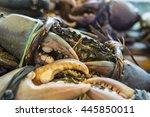 sea crabs tied with plastic... | Shutterstock . vector #445850011