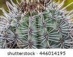 Small photo of An Acanthocalycium thionanthum cactus which originates from Argentina.