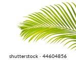 palm leaf | Shutterstock . vector #44604856