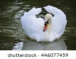 swans swimming in the pool... | Shutterstock . vector #446077459