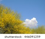 Small photo of Scenic views of Sonora Desert flora abound in the Scottsdale area of Arizona. Here a Palo Verde tree blossoms with yellow spring flowers, against a blue sky with fair weather clouds.