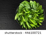 peppermint. juicy  fresh ... | Shutterstock . vector #446100721