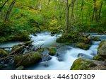 oirase gorge in aomori  japan | Shutterstock . vector #446107309