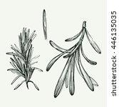 elegant hand drawn illustration ... | Shutterstock .eps vector #446135035