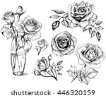 Stock vector  roses hand drawn flower set 446320159