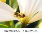 closeup of two bees  one allive ... | Shutterstock . vector #446329321