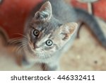 Stock photo little cute cat looking to the right 446332411