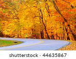 A forest road curves to the left before a brilliant panoply of golden autumn foliage - stock photo