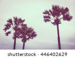 beautiful nature with palm tree ... | Shutterstock . vector #446402629