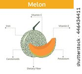 melon nutrient of facts and... | Shutterstock .eps vector #446434411