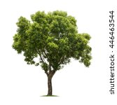 Stock photo isolated tree on white background 446463544