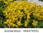 Beautiful Yellow Flowers Bush