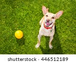 Happy Chihuahua Terrier Dog  I...