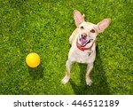 Happy Chihuahua Terrier Dog  I...