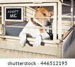 Small photo of jack russell abandoned dog and left all alone in animal shelter or cage, begging to be adopted and come home to owners