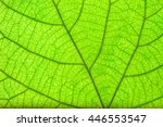 green leaf close up | Shutterstock . vector #446553547